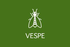 Trappole per insetti: vespe
