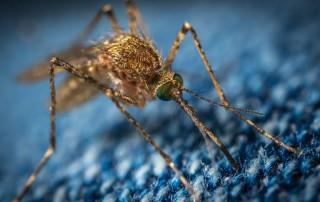 Lotta alla zanzara_Incontri pubblici