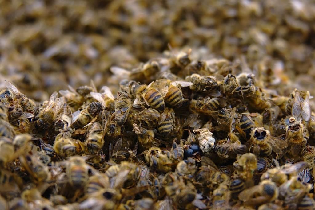 Moria api causata da insetticidi per zanzare
