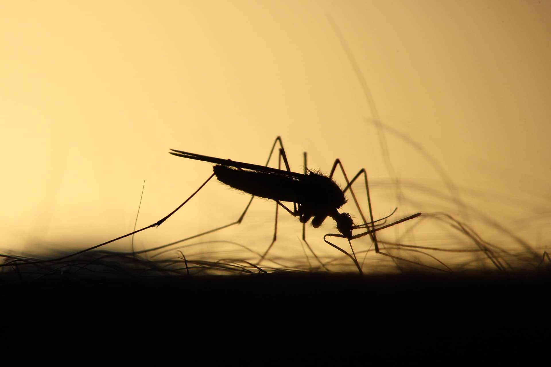 World Mosquito Day - ISI Trap